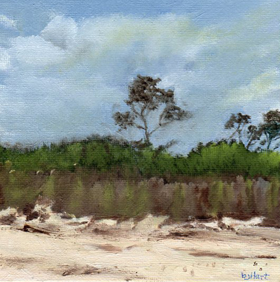 "Morning at Savage Neck Dunes is an 6""x6"" oil painting on board by Barbara J Hart. Inspired by a trip to this golbally unique environment."