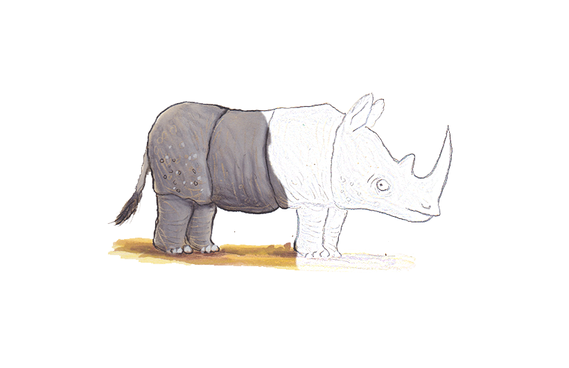AS-rhino-102ppi-drawing.png