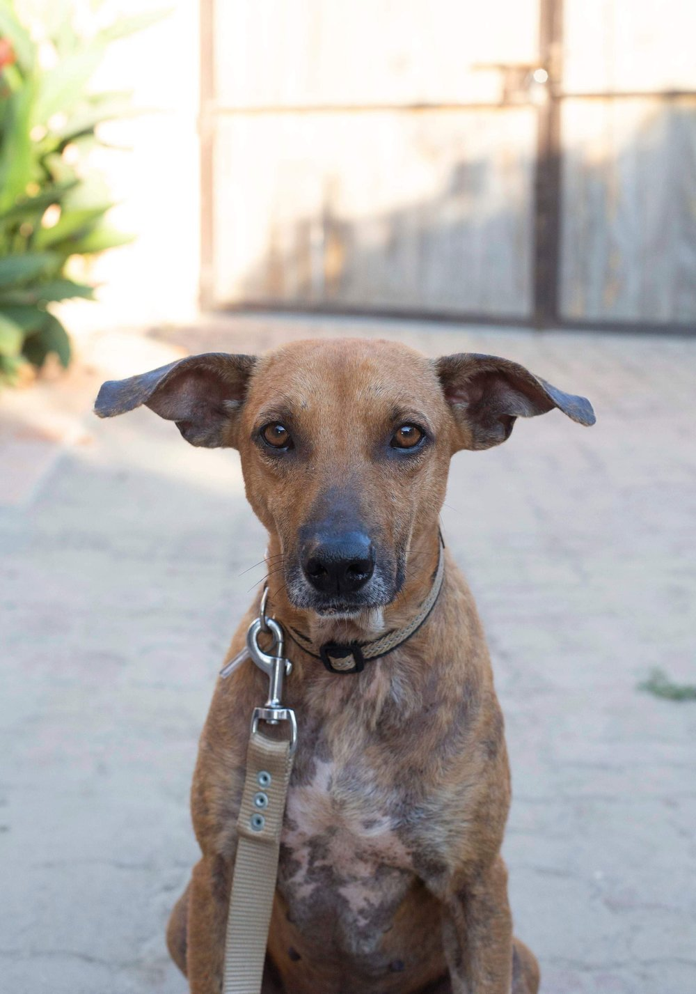 Taco Banderas, our 500th rescue from sayulita, Mexico - April 2019