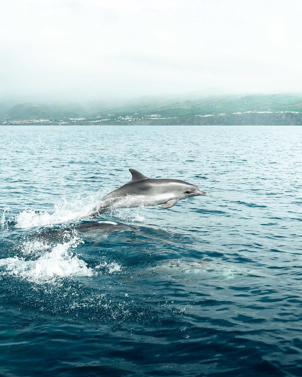 Madeira-7.jpg