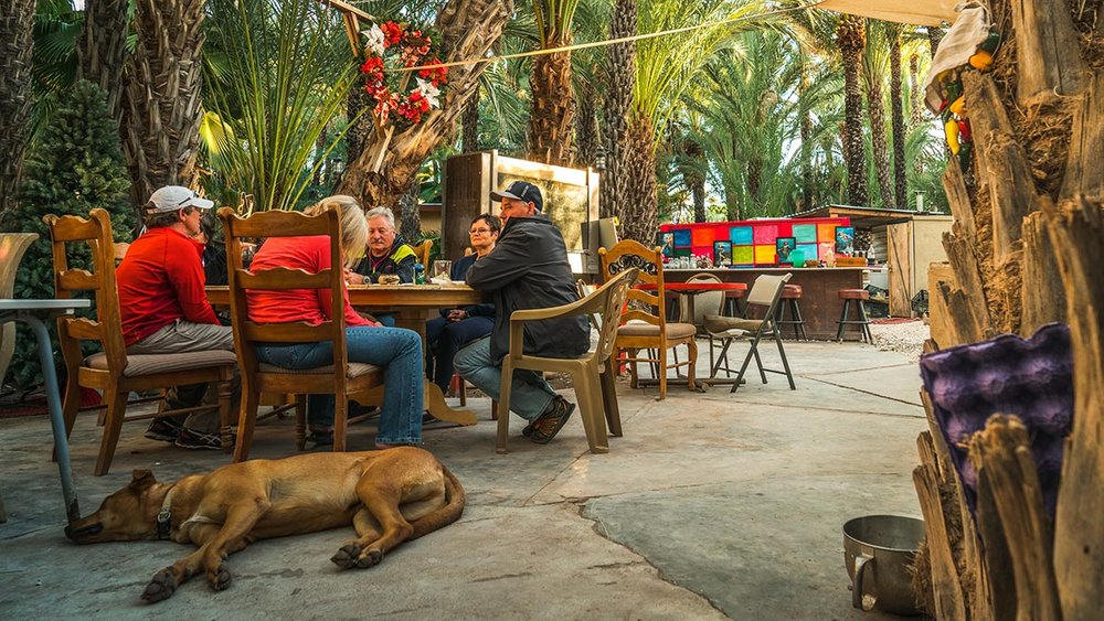 ‍ Enjoy a drink under the Date Trees with friends and other travellers
