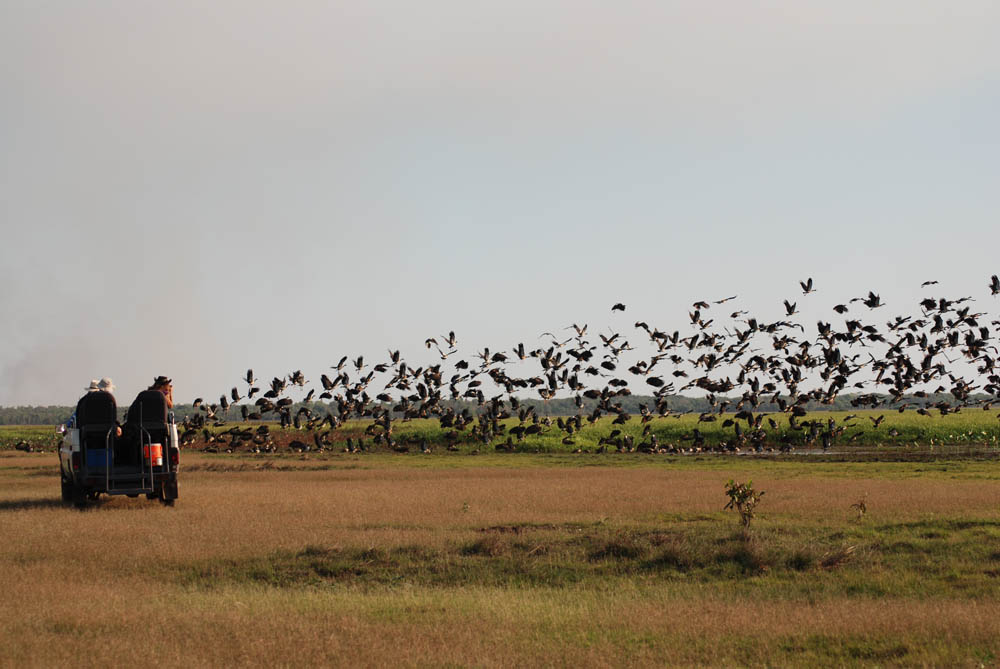 Birding & Wildlife Tours