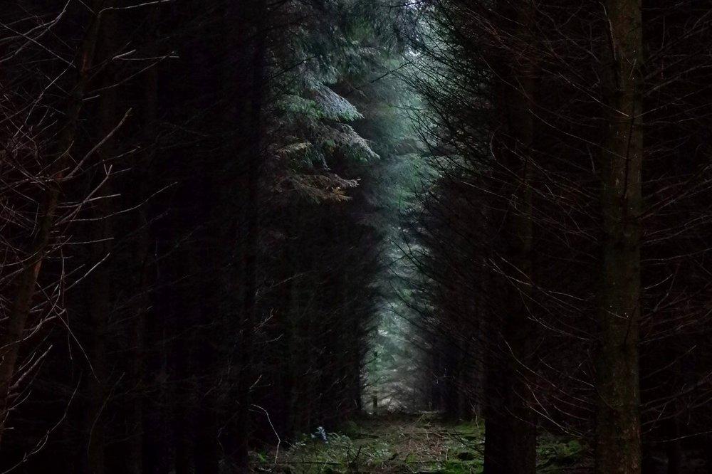 Cardinham+Woods%2C+Cornwall