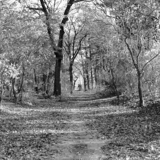 fun-run trail