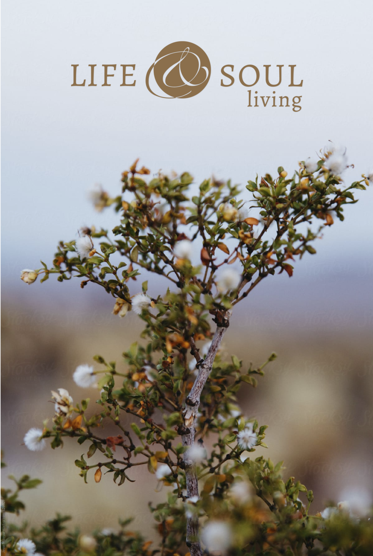 LIFE & SOUL LIVING - Logo Design