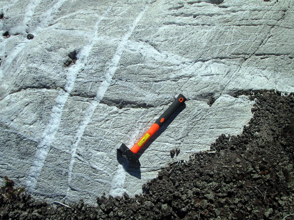 Quartz veins in an altered granodiorite.