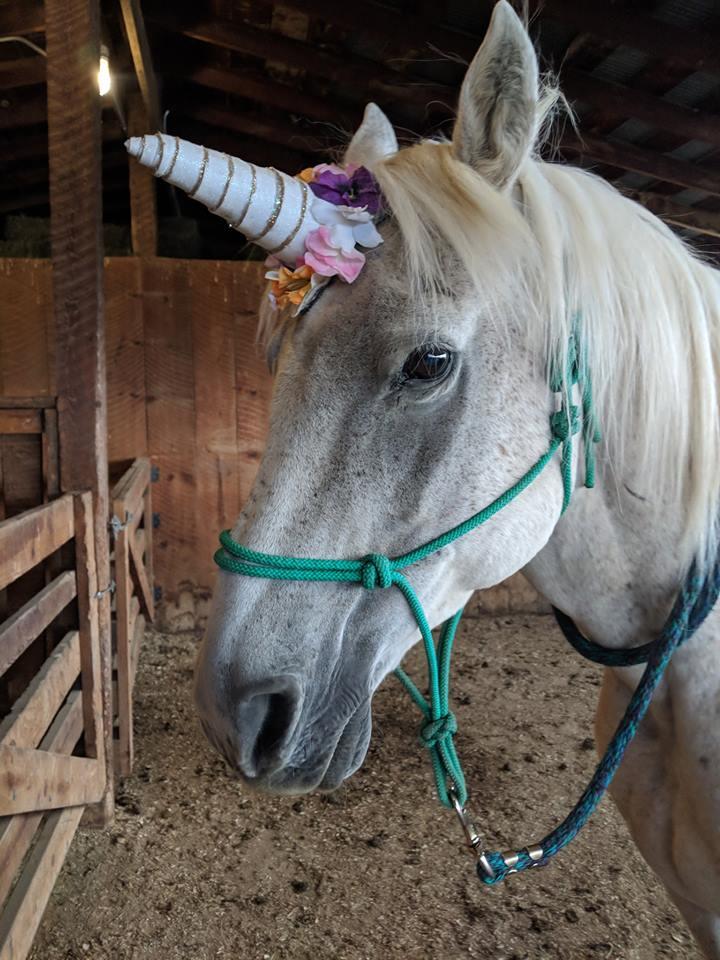 gandalf Unicorn.jpg