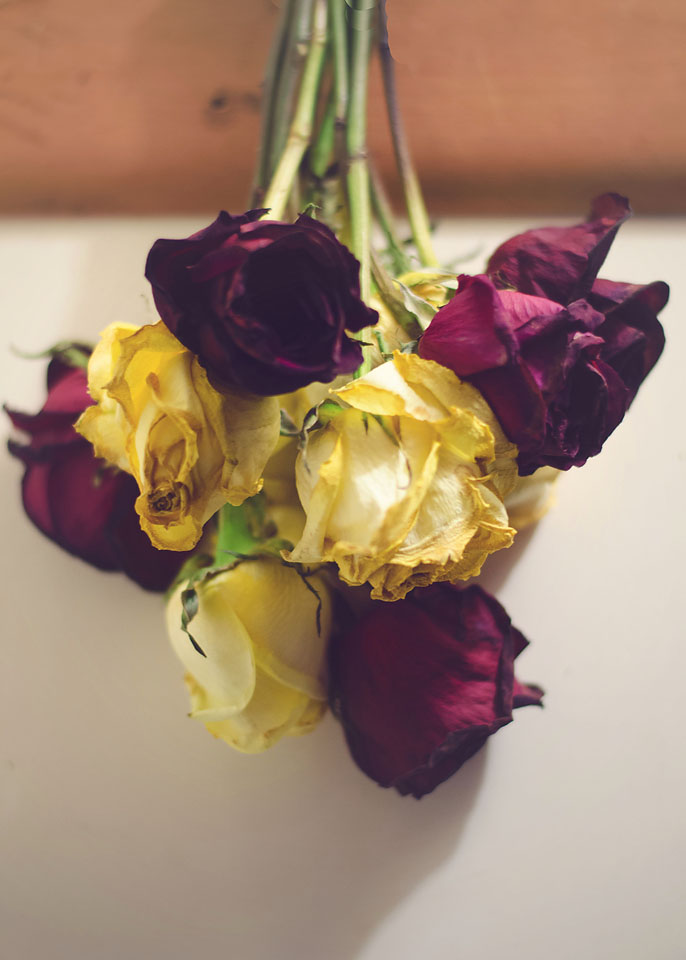 red yello roses drying 2019 copy.jpg