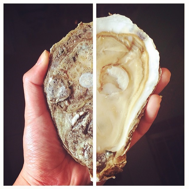 #16 Pretty pleased with my shucking job on this monstrous Pleasure House Oyster.