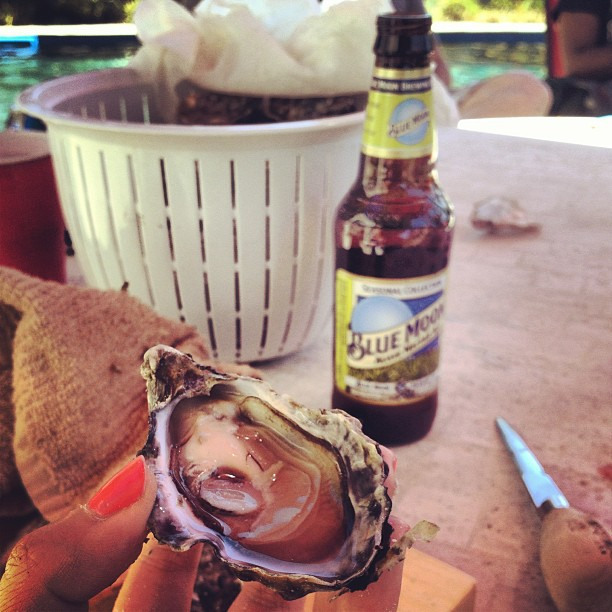 #5 Shucking Hog Island Sweetwaters by the pool during Napafest.