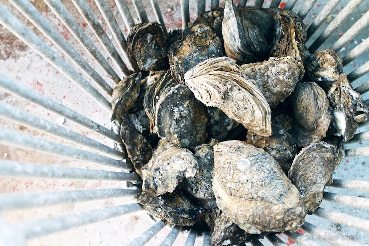 IAHS-2015-07-10-Gulf-Oyster-Tour-IMG_4272.jpg