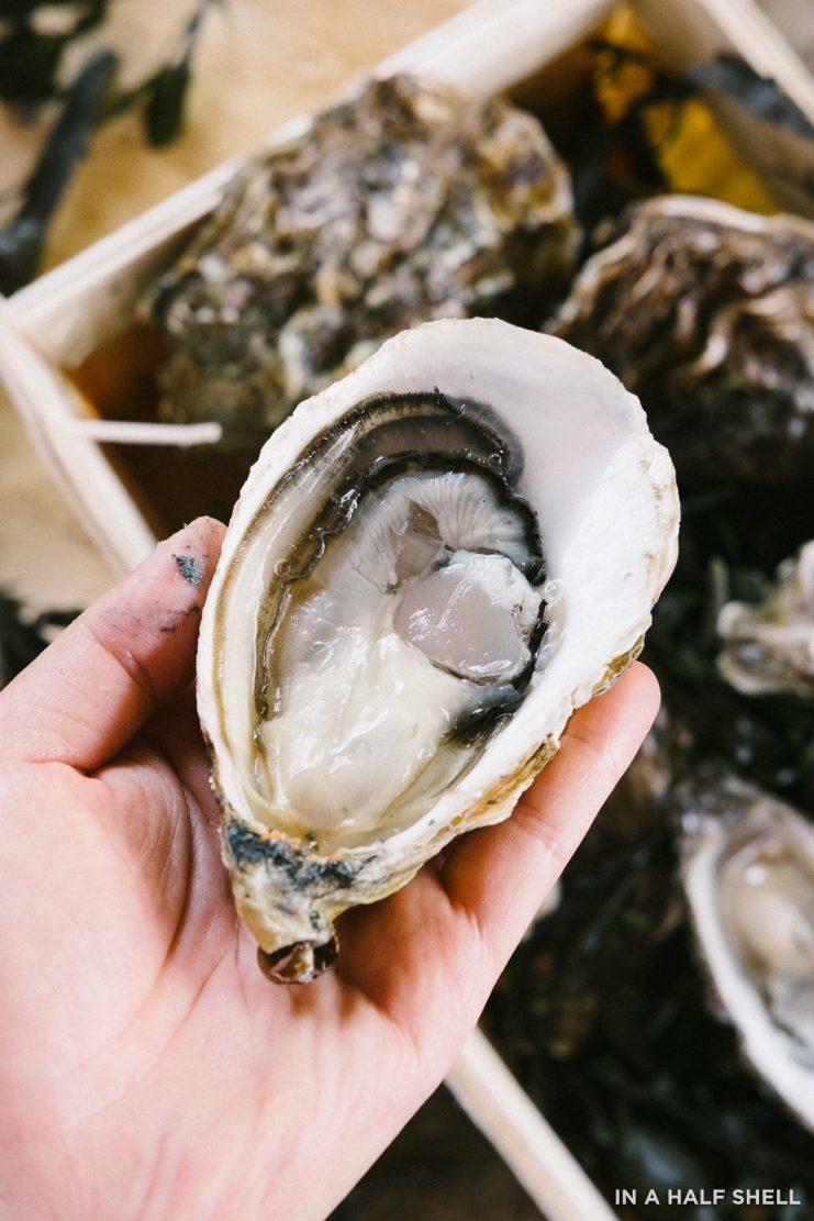 InAHalfShell-Bonaire-Oysters-0283-741x1111.jpg
