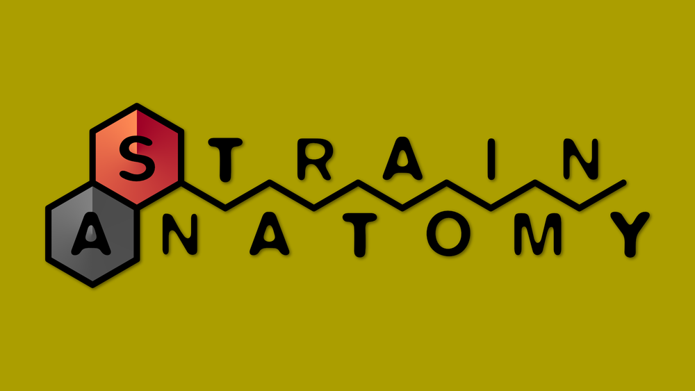 strainanatomylogooutline.png