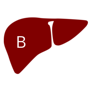 Hepatitis B -
