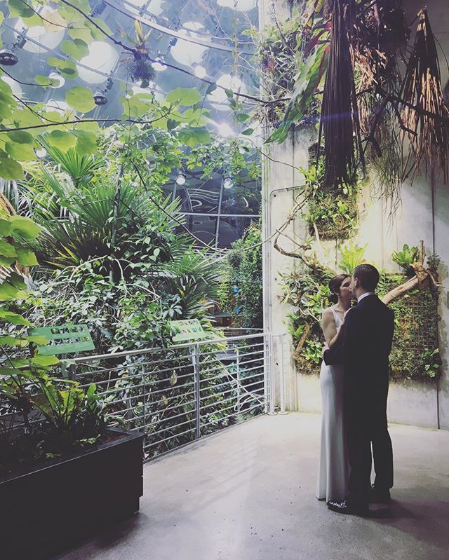 A sneak peak from today's #SfWedding -- A little moment alone in the @calacademy #rainforest before they join their guests! Congrats K+M!!