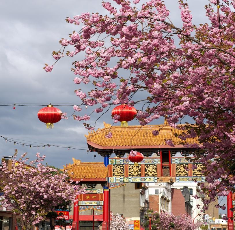 drawn-cherry-blossom-china-521640-2526839.jpg