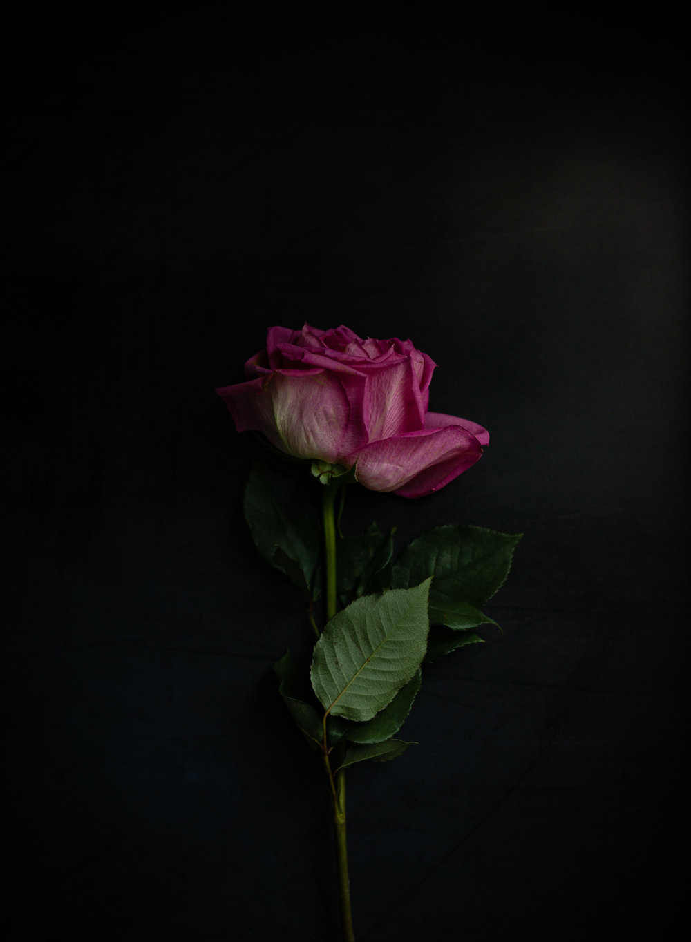 Roses30MINUTES-9.jpg