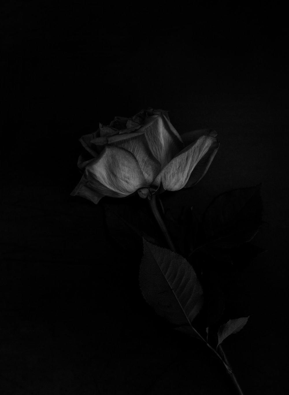 Roses30MINUTES-12.jpg