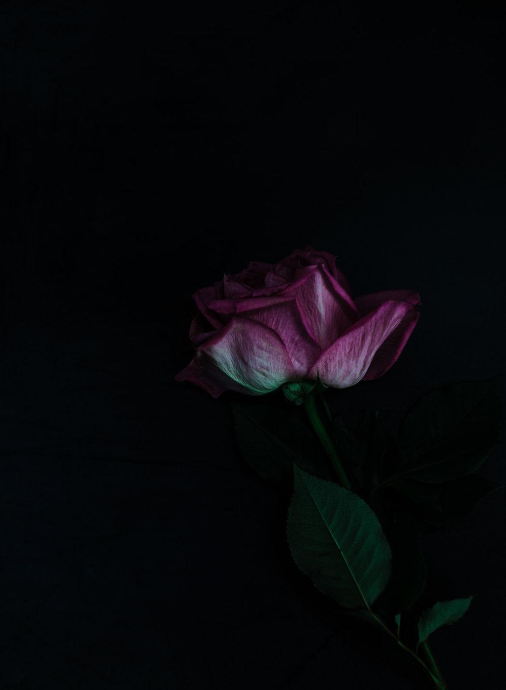 Roses30MINUTES-13.jpg