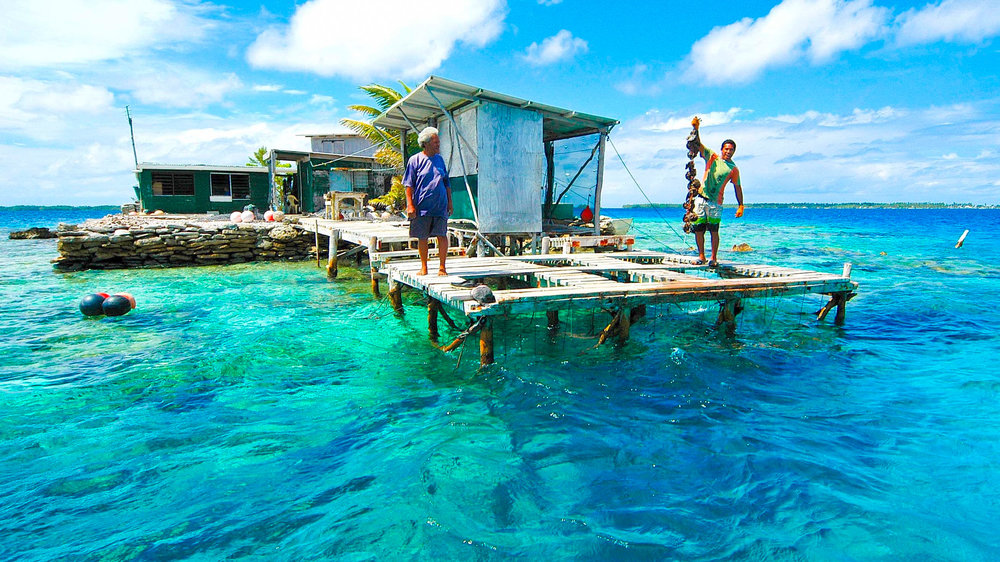 bergman_cook_islands_black_pearl_manihiki_lagoon_happy.jpg