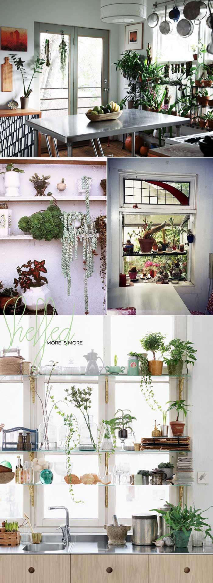 Dine-X-Design-Plants-On-Kitchen-Shelves-2