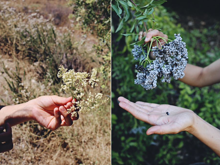 Foraging Elderflower | Emily Han | Dine X Design