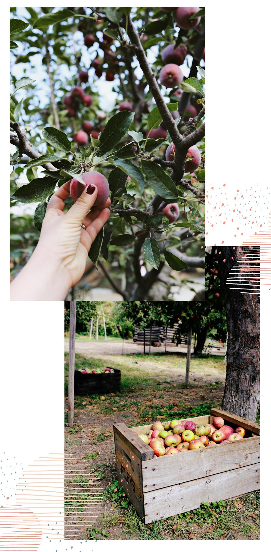 03_Apple-Cardamon-Tart-Dine-X-Design.jpg