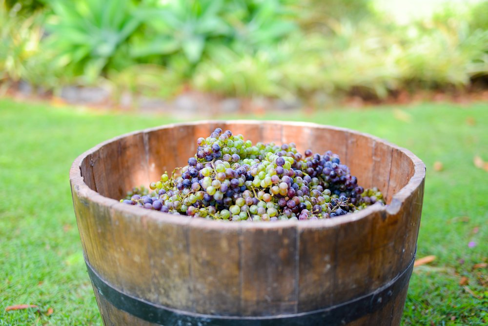 Raleigh Winery First Harvest-379.jpg