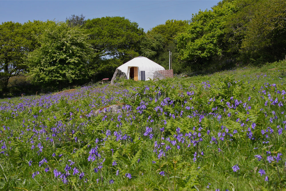 Ash Field Yurt with pod