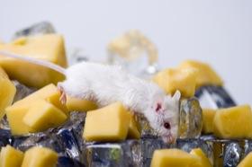 mouseeat1.jpg