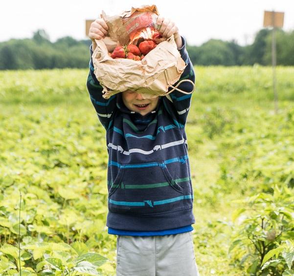 Tom+Paduano+-+kid+with+strawberries.jpg