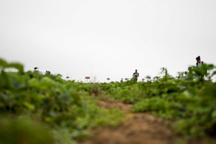 adam-jacono-flying-plow-farm-week-2-04.jpg