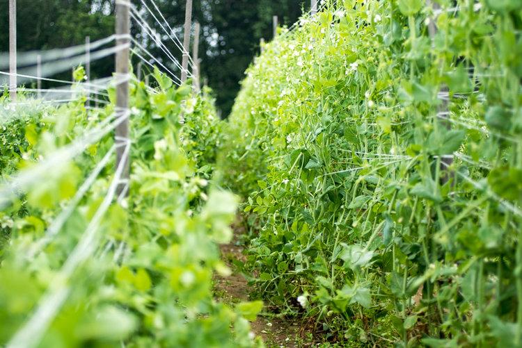 adam-jacono-flying-plow-farm-week-2-03.jpg