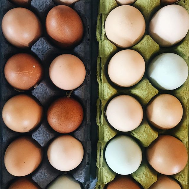 """There's nothing better than farm fresh eggs.🥚 Did you know that you can donate items on our Rethink pantry wish list? Reach out to annas@rethinkfood.nyc to receive our culinary team's """"wishlist"""" of staple food items (i.e. potatoes, salt, oils, etc.) along with what it costs our kitchen on a monthly basis to purchase these items."""