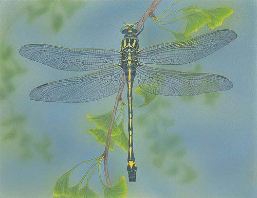 Dragonhunter  Akitsushima (Isle Of The Dragonfly) Collection