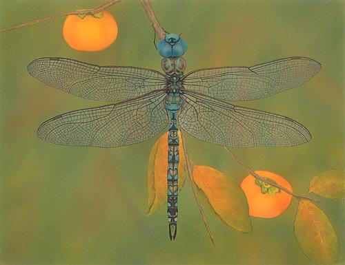 Blue-Eyed Darner  Akitsushima (Isle Of The Dragonfly) Collection