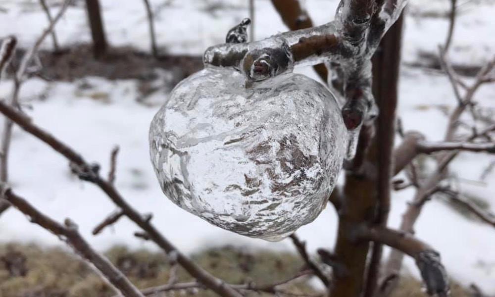 frozen apple.jpg