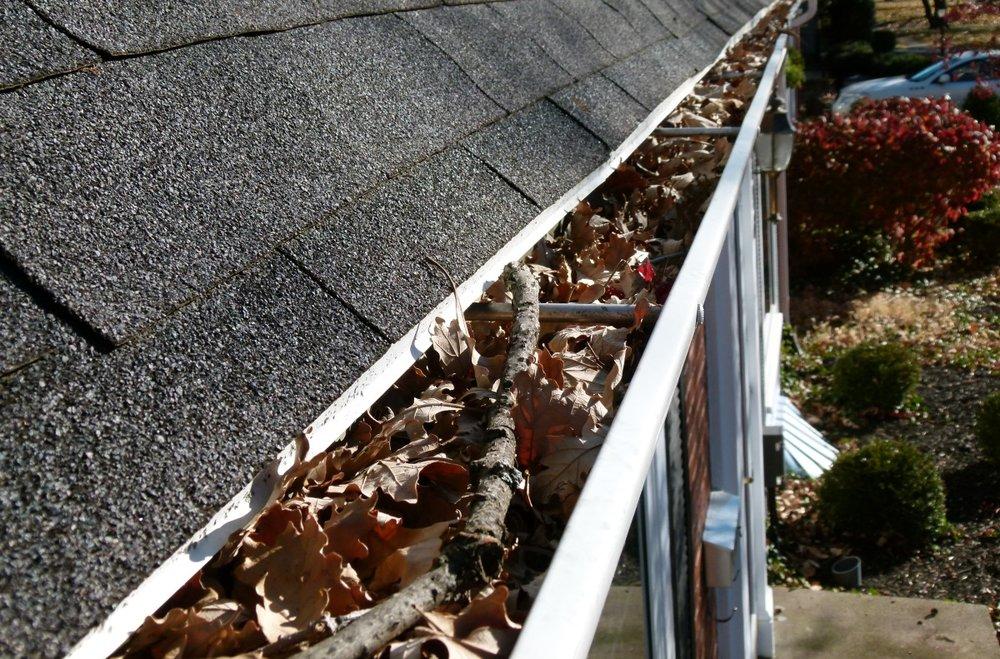 fall leaves in gutter.jpg