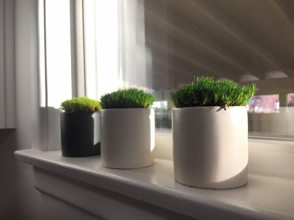 Moss Pots.jpg