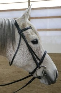 Miz Skarlett - Racing is in my blood! I'm an Arabian mare—smart and sensitive. I was too small to race, but I just love all the people at TRI.