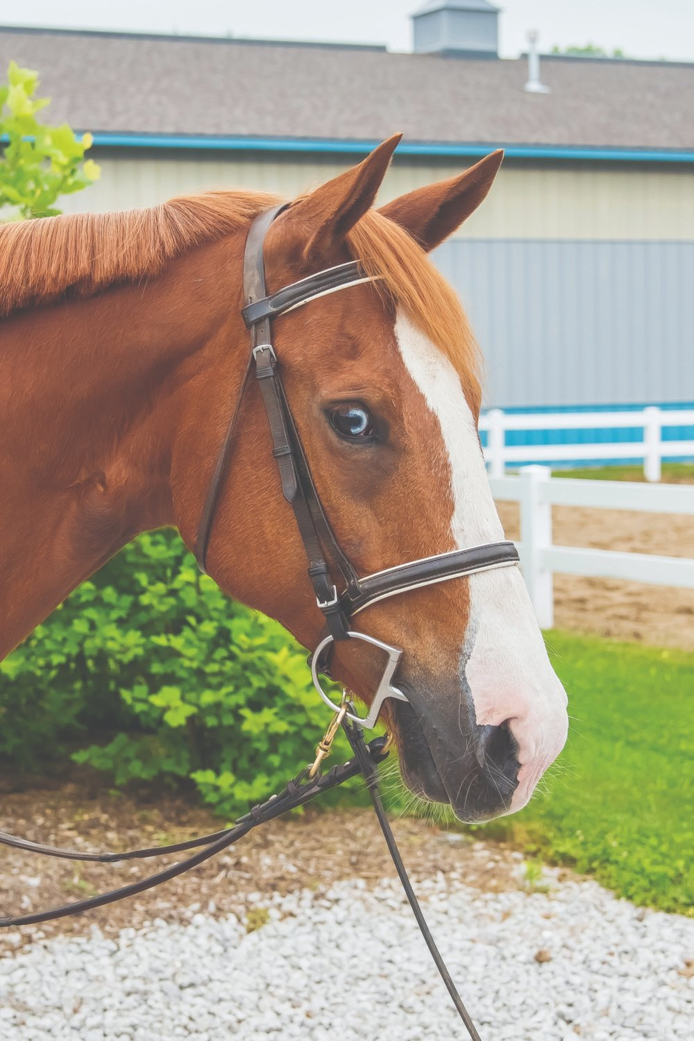 Dakota - I really enjoy helping independent riders with my sloooow jog trot. I'm a chestnut Quarterhorse gelding, and if you look closely you'll see that I have one half-blue eye!