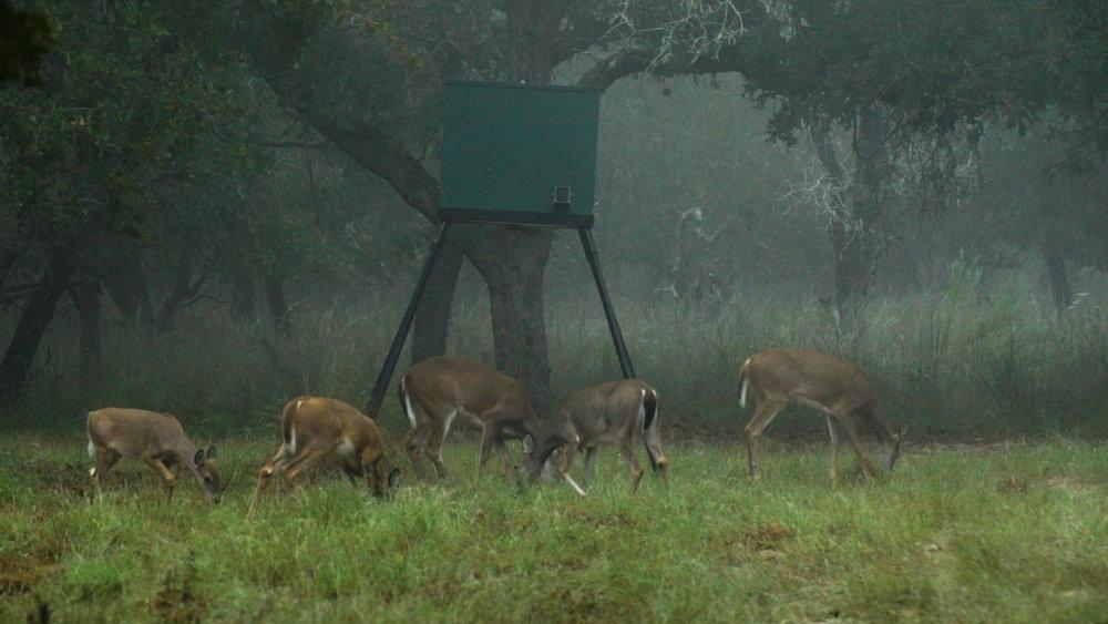 Deer Feeder.jpg