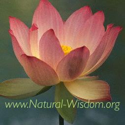 new lotus website.jpg