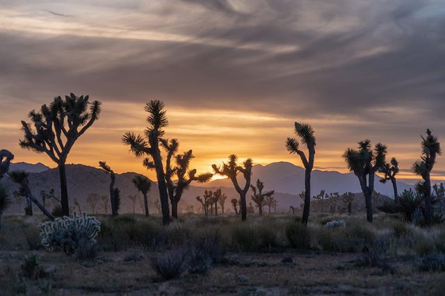 Never seen a sunset in Joshua Tree? Here's what your missing. Book a sunset hike with us to experience it for yourself.
