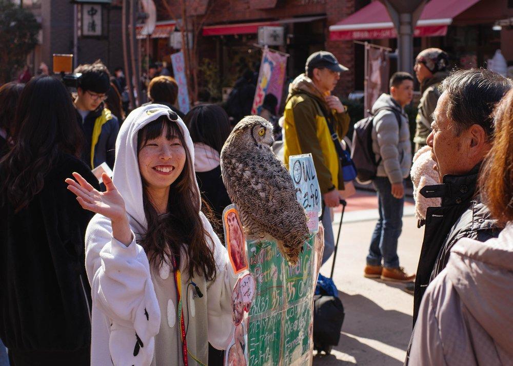 tokyo owl street photo