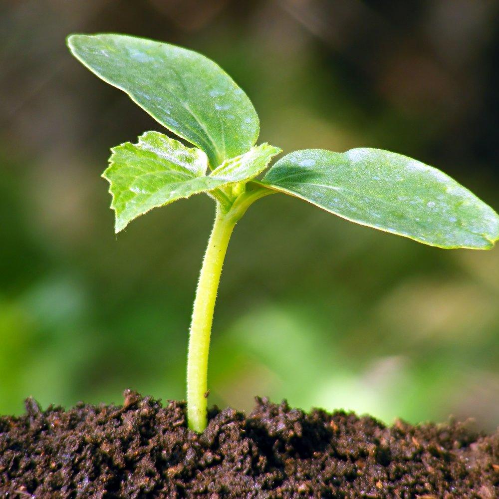 seedling-flourishing.jpg