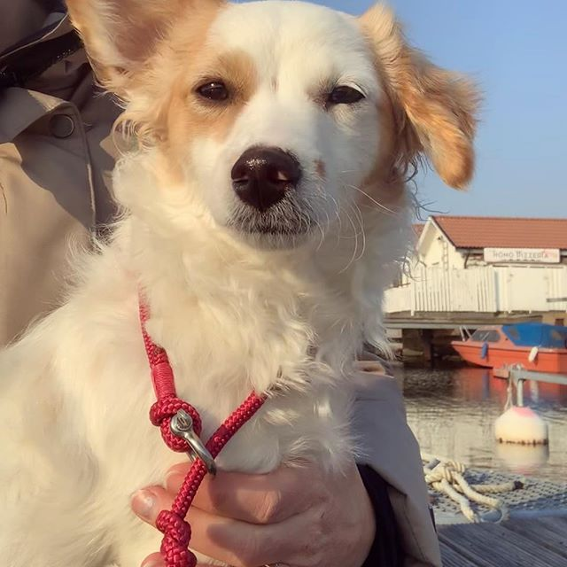 Love dogs and all things nautical? Stay tuned for our latest addition to the Maris Sal collection; nautically inspired dog leashes. Made for real sea-dogs.
