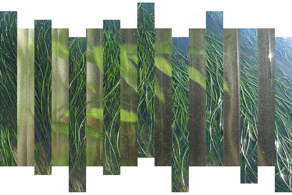 SeaweedFINAL-1500pxWideNEW.jpg