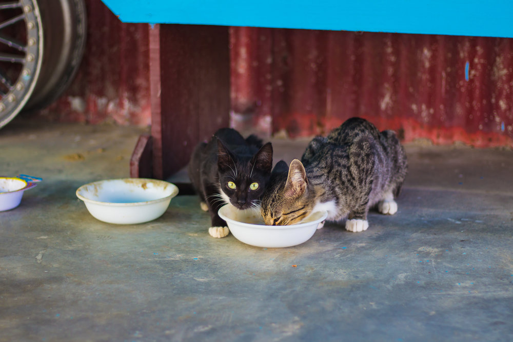 Neuter Pricing - Spay/Neuter ClinicCat Neuter (Male): $30.00Cat Spay (Female): $60.00Dog Neuter (Male): $70.00Dog Spay (Female): $90.00Spay/Neuter CertificatesFor all cats and dogs NOT adopted from St Francis Animal Shelter, we offer Spay/Neuter Certificates, which are valid at Buffalo Vet, Big Horn Vet &Powder River Vet when funding is available.Male Cat: $27.00Female Cat: $48.00Male Dog: $50.00Female Dog: $55.00