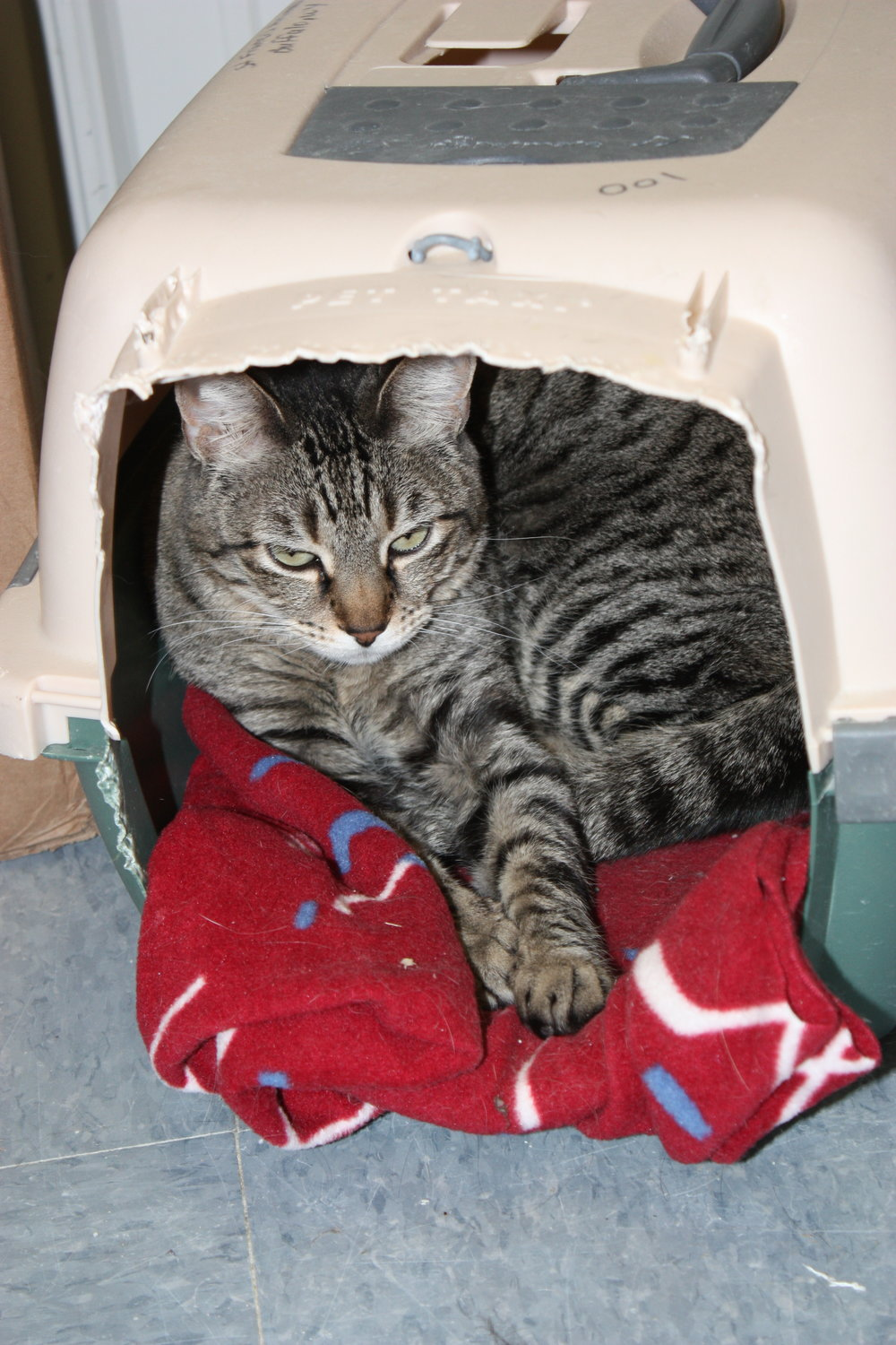 Loan Closet - Need to borrow a kennel, carrier, or live trap? You've come to the right place! We do require a deposit which will be refunded upon return of the equipment. We often have excess used carriers and kennels for sale. Larger sizes are $20.00 and smaller sizes are $10.00. Give us a call at (307)684-1738 to check availability.